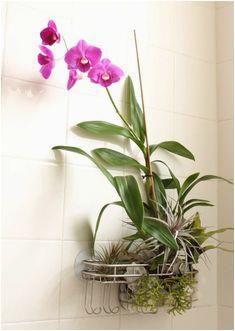 4d989c0766bd5937cb a46b orchids orchid care
