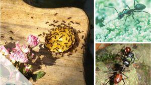Ameisen Bekämpfen Backpulver Garten Ameisen Bekämpfen Wirksame Hausmittel Wie Backpulver