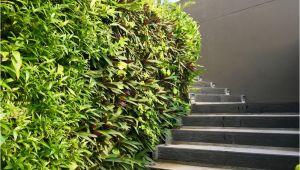Betonmauer Garten Streichen Betonmauer Im Garten Darauf ist Zu Achten