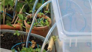 Bewässerungssystem Garten Bauen Bewässerungssystem Selber Bauen Faden