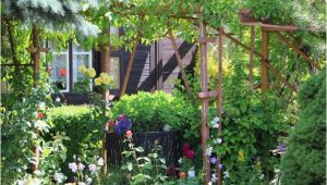 Blühende Sträucher Für Den Garten Blühende Garten Sträucher 20 Winterharte Büsche Für