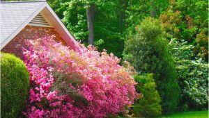 Blühende Sträucher Für Den Garten Winterhart Sträucher Für Den Garten Im sommer 9 Effektvolle sorten