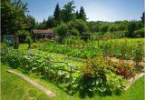Garten Aufbewahrungsschrank Obi so Funktioniert ökologisches Gärtnern Obi Informiert
