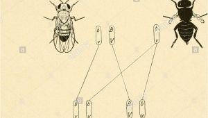 Graue Fliegen In Der Küche Es 33 Stock S & Es 33 Stock Page 3 Alamy