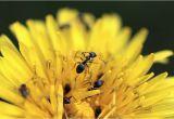 Große Ameisen Im Garten Bekämpfen Ameisen Bekämpfen Im Garten Natürlich Mit Hausmitteln