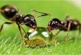 Große Ameisen Im Garten Bekämpfen Ameisen Bekämpfen Im Haus Und Im Garten Hausmittel Gegen