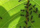 Große Ameisen Im Garten Bekämpfen Ameisen Im Garten
