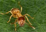 Große Ameisen Im Garten Bekämpfen Ameisen Im Garten Und Rasen Bekämpfen Und Vertreiben