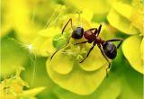 Große Ameisen Im Garten Bekämpfen Ameisen Im Garten Was Gegen Ungebetene Krabbler Hilft