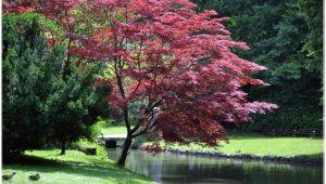 Große Bäume Für Den Garten Kaufen Bäume Für Den Garten Kaufen