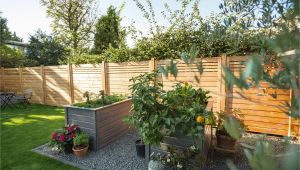 Günstiger Sichtschutz Garten Sichtschutz Für Den Garten – so Entscheiden Sie Richtig