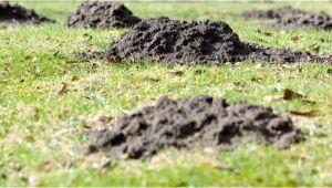 Hausmittel Gegen Maulwürfe Im Garten Maulwürfe Und Wühlmäuse Vertreiben