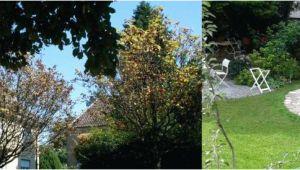 Hilfe Im Garten Gesucht Köln Hilfe Im Garten Gesucht Fresh Ich Werde Schrebergartnerin