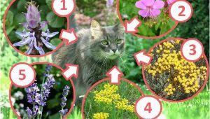 Hunde Und Katzen Aus Dem Garten Vertreiben Katzen Aus Dem Garten Vertreiben Katze Im Foto Pixabay