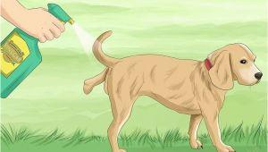 Hundeabwehr Garten Hundeschreck Hundeabwehr Garten Bildtitel Keep Dogs F Lawn Step 12