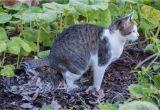 Hundeabwehr Im Garten Katzenschreck Im Test Effektive Abwehr Gegen Katzen Im