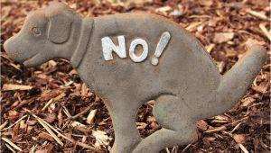 Hundekot Im Garten Kompostieren Hundekot Im Garten Was Tun so Verhindern Sie Lästige