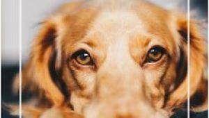 Hundekot Im Gemeinsamen Garten Die 187 Besten Bilder Von Mein Hund In 2019