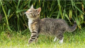 Katzen Aus Dem Garten Vertreiben Katzen Aus Dem Garten Vertreiben Mit Sen 4 Tricks Klappt S