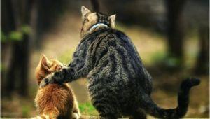 Katzen Dauerhaft Aus Dem Garten Vertreiben Wie Vertreibt Man Katzen Dauerhaft Aus Dem Garten Elstern