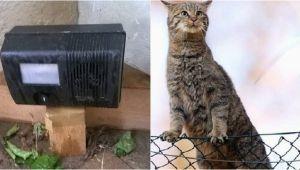 Katzen Dauerhaft Aus Garten Vertreiben Katzenschreck Wird Oft Auch Für Nachbarn Zu Einer Plage