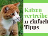 Katzen Vertreiben Aus Dem Garten Ultraschall 11 Tipps Katzen Vertreiben Aus Dem Garten