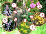 Katzen Vertreiben Aus Dem Garten Ultraschall Katzen Aus Dem Garten Vertreiben Katze Im Foto Pixabay