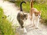 Katzen Vertreiben Aus Dem Garten Ultraschall Katzen Aus Garten Vertreiben Die Verpiss Dich Pflanze