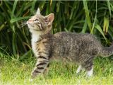 Katzen Vertreiben Aus Dem Garten Ultraschall Katzen Aus Garten Vertreiben Hunde Und Katzen Vertreiben