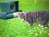 Katzen Vertreiben Aus Dem Garten Ultraschall Katzen Vertreiben Illegal Wie Kann Ich Fremde Katzen