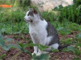 Katzen Vertreiben Aus Dem Garten Ultraschall Katzen Vertreiben so Halten Sie Sie Aus Dem Garten Fern
