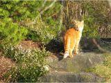 Katzen Vertreiben Aus Dem Garten Ultraschall Tipps Zum Katzen Vertreiben Und Katzenabwehr