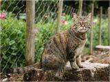 Katzen Vertreiben Aus Dem Garten Ultraschall Ultraschall Vertreiber Test › Vergleich Test & Bestenliste
