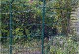 Katzenzaun Garten österreich Unser Katzenzaun Im Garten Katzen forum