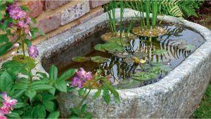 Kleine Wasserstelle Im Garten Kleine Wassergärten Mein Schöner Garten