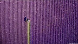 Küche Lavendel Streichen Den Spuren Von theodor Storm A
