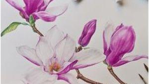 Magnolie Küchenfarbe Die 10 Besten Bilder Von Tulpenbaum