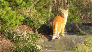 Mittel Zur Katzenabwehr Im Garten Tipps Zum Katzen Vertreiben Und Katzenabwehr