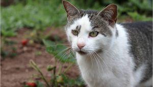 Natürliche Mittel Gegen Katzen Im Garten Mittel Gegen Katzenurin Im Garten
