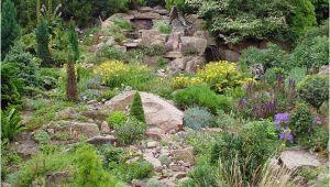 Pflanzen Für Schattigen Garten Garten Gebirgs Pflanzen Für Den Schattigen Steingarten