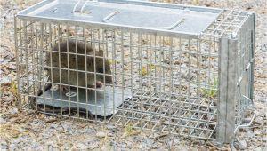 Rattenbekämpfung Im Garten Ohne Gift Rattenbekämpfung Im Garten so Werden Sie Sie Los