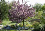 Schöne Große Bäume Für Den Garten Bäume Richtig Pflanzen – Obi Gibt Tipps Für Planung