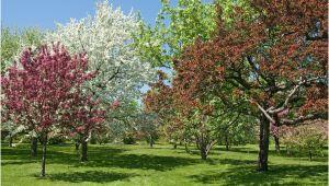 Schöne Große Bäume Für Den Garten Die Schönsten Bäume Für Den Eigenen Garten Heimhelden