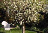 Schöne Große Bäume Für Den Garten Ein Baum Für Den Garten Desmondo Wohnen