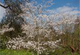 Schöne Große Bäume Für Den Garten Laubbäume Für Den Garten Die Schönsten sorten
