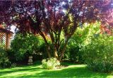 Schöne Große Bäume Für Den Garten Schattenspender Baum Kleiner Garten – Wohn Design