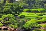 Schöne Große Bäume Für Den Garten Schöne Bäume Für Den Garten