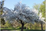 Schöne Große Bäume Für Den Garten Seltene Bäume Für Den Garten