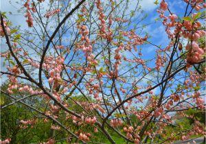 Schöne Kleine Bäume Für Den Garten Baum Für Den Garten Eine Auswahl Der Schönsten sorten