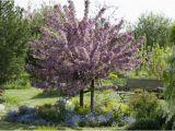 Schöne Kleine Bäume Für Den Garten Bäume Richtig Pflanzen – Obi Gibt Tipps Für Planung